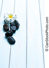 Flower on group of black stone.