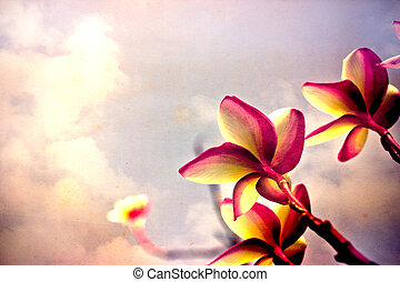 flower on sky old paper.