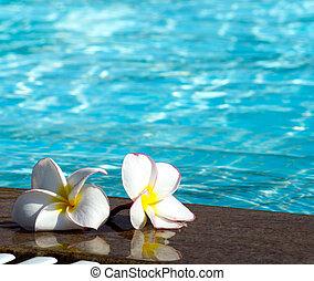 flower on swimming pool - Tropical flower Plumeria on...