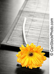 Flower on Table - Yellow gerber daisy on table with...