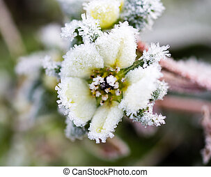 flower on the plant in the icy cold