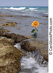 Flower on the Reef - A bright orange ocean flower coming up...