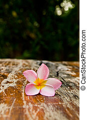 Flower on the Table