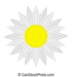 flower on white background