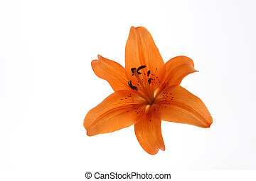 Flower on white background.