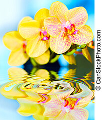 flower orchid.