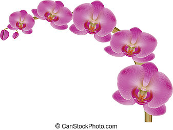 Flower Orchid
