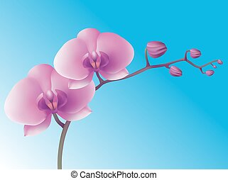 Flower orchid. Vector