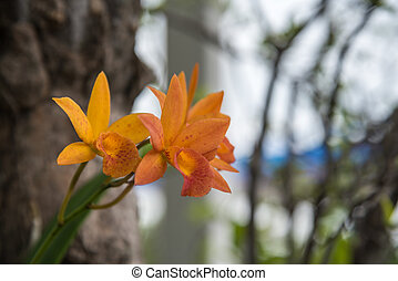 Flower (Orchidaceae or Orchid Flower) yellow and orange...