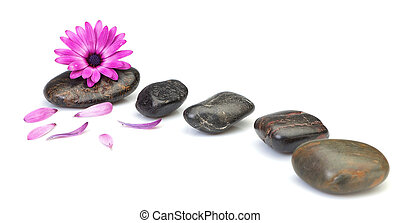 Flower osteospermum decoration concept of health spas. On a white background.