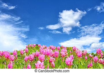 flower over blue sky