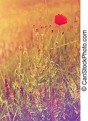 Flower pastel