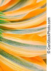 Flower petals background