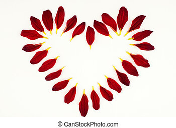 Flower petals in the shape of heart