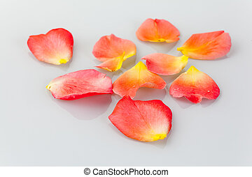 Flower petals of a rose