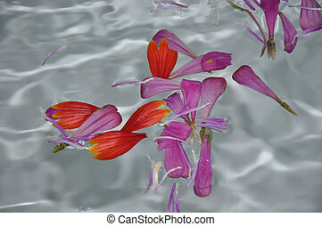 Flower petals on the water