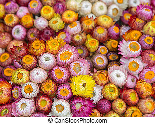 flower - Selection of Various colorful Flowers as a...