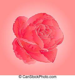 Flower pink rose  symbol  of love