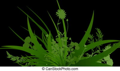 flower & plant growing silhouette.