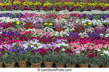 Flower plants arranged in design