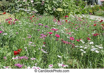 Flower plants in farm