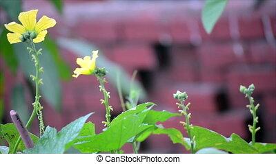 Flower Pollens by Honey Bee