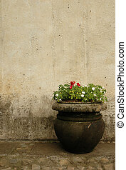 Flower Pot against Old Wall