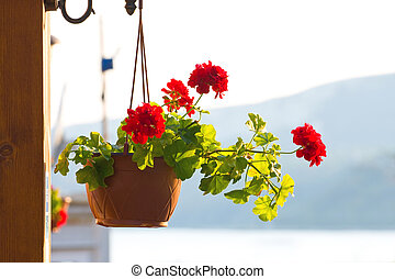 flower pot dangling from the roof