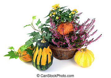 flower pot of heather with mini pumpkins on isolated white background. Halloween.