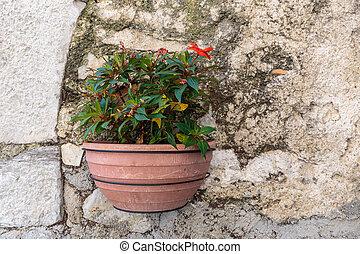 Flower pot on a wall