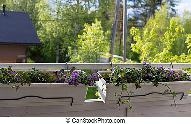 Flower pots on the balcony.