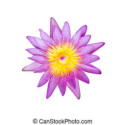 Flower purple lotus isolated on white background with clipping path.