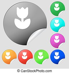 Flower, rose icon sign. Set of eight multi-colored round buttons, stickers. Vector
