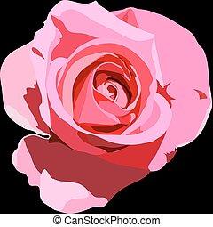 flower rose on a black background