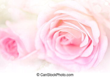 Flower roses background with soft pink color and blur style