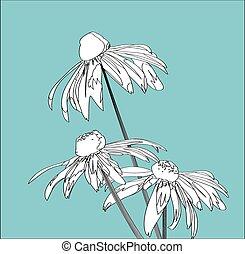 flower rudbeckia - Rudbeckia flower on a background of blue...