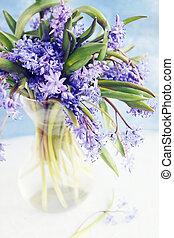 flower scilla