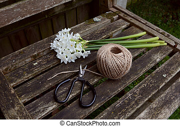 Flower scissors cutting twine, next to a bunch of narcissi