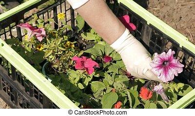 flower seedling on a plant