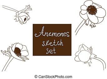 Flower set detailed hand drawn anemones
