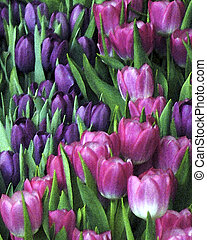 Spring tulips in bloom with a watercolor finish.