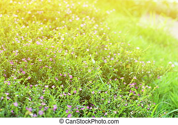 flower small vintage lovely grass at relax morning time sunlight for background footage