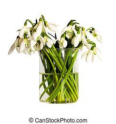 flower snowdrop bouquet