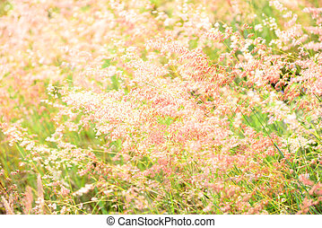 flower soft grass at evening