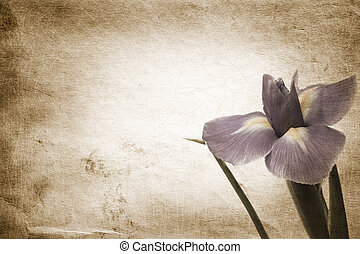 flower - special paper background ,toned and grunge f/x