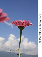 Flower Stock Imager - The pink flower wants to fly with a...