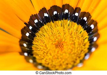 Flower - Detail of a flower