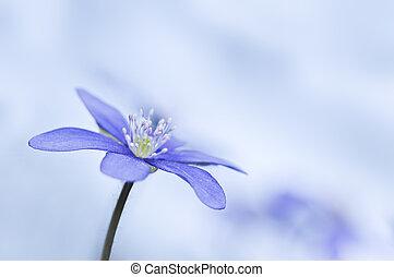 flower - single blue flower close up