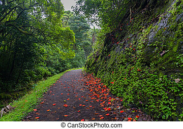 Path strewn with red flowers through a lush forest in Maui, Hawaii