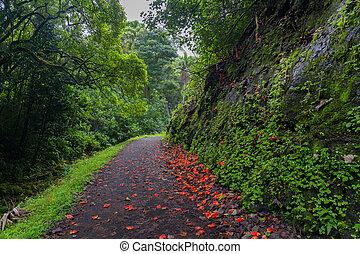 Flower-Strewn Path Through Lush Forest - Path strewn with...